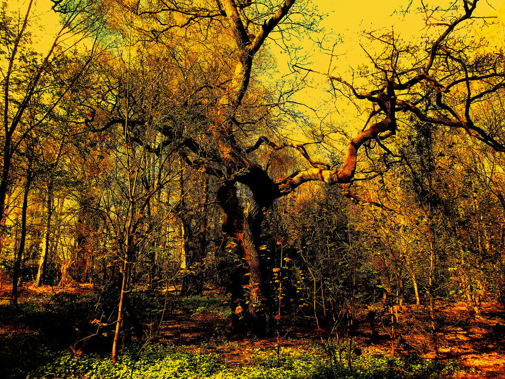 Psychedelic Spring Woodland by Psychopathogen