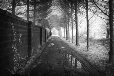 Charleville Forest by seancoetzer