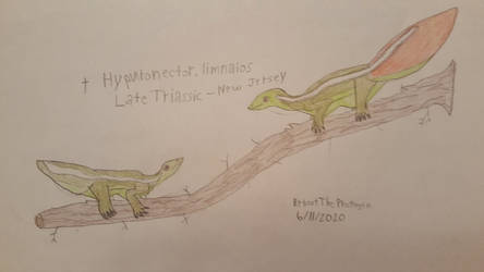 Hypuronector. limnaios: The Mating Ritual