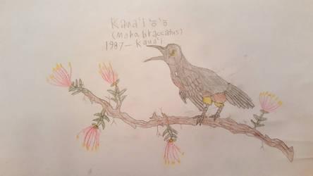 The last Kaua'i 'o 'o (Moho braccatus)