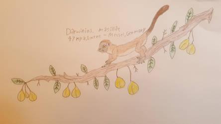 Ida (Darwinius masillae)