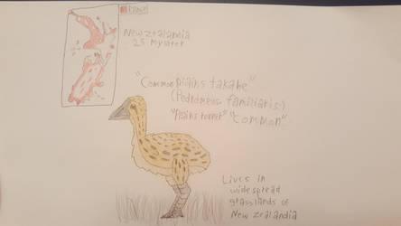 Common plains takahe (Padromeus familiaris)