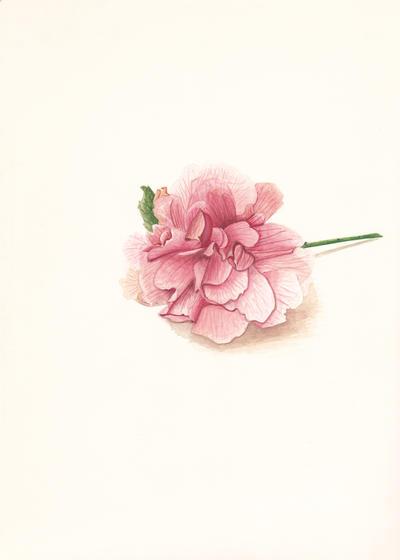 Smiley flower by Fionka14