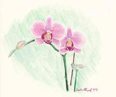 Pink Orchids by WiseGirl15