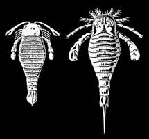 Haeckel's Beasties Stock IV by Foxytocin