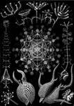 Haeckel's Beasties Stock VII