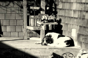 Have a nap while you wait by Foxytocin