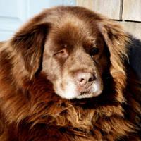 Whole Lot of Big Brown Dog II by Foxytocin