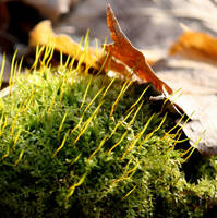 M is for March and Moss by Foxytocin