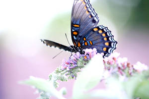 Buddleia and Butterfly II by Foxytocin