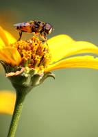 Yellow to Brown Macro by Foxytocin