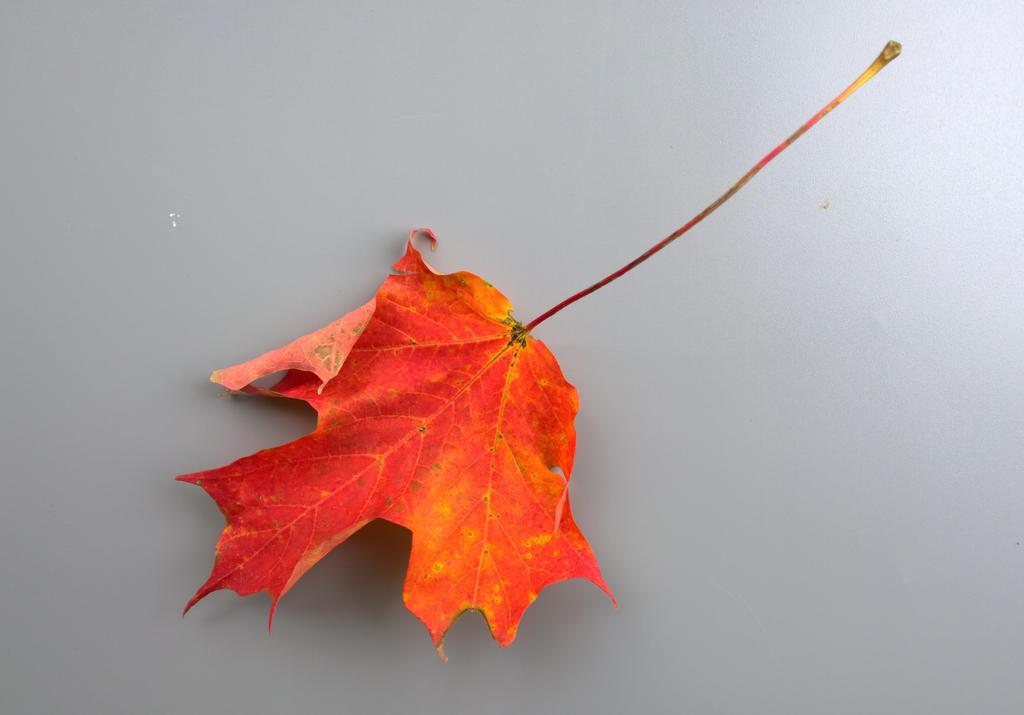 Autumn Leaf Photo Stock by Foxytocin