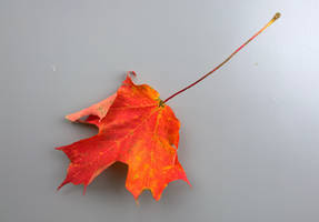 Autumn Leaf Photo Stock by Foxytocin