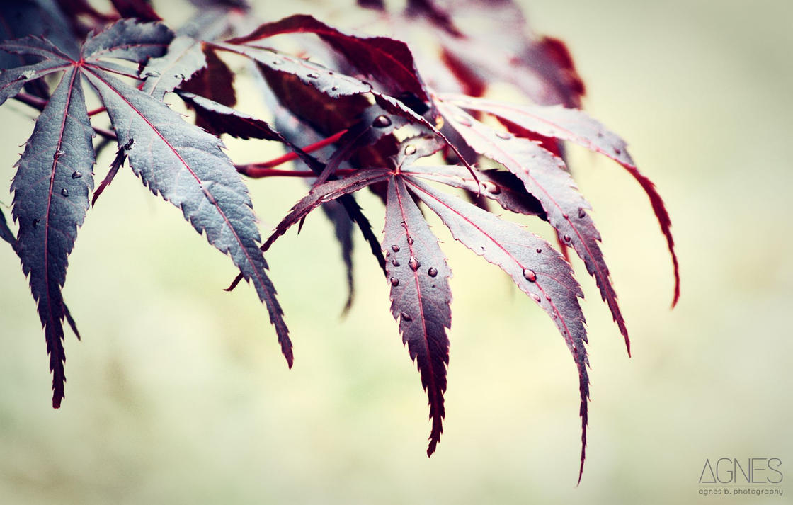 Leaves no2 by AgnesBPhoto