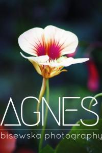 AgnesBPhoto's Profile Picture