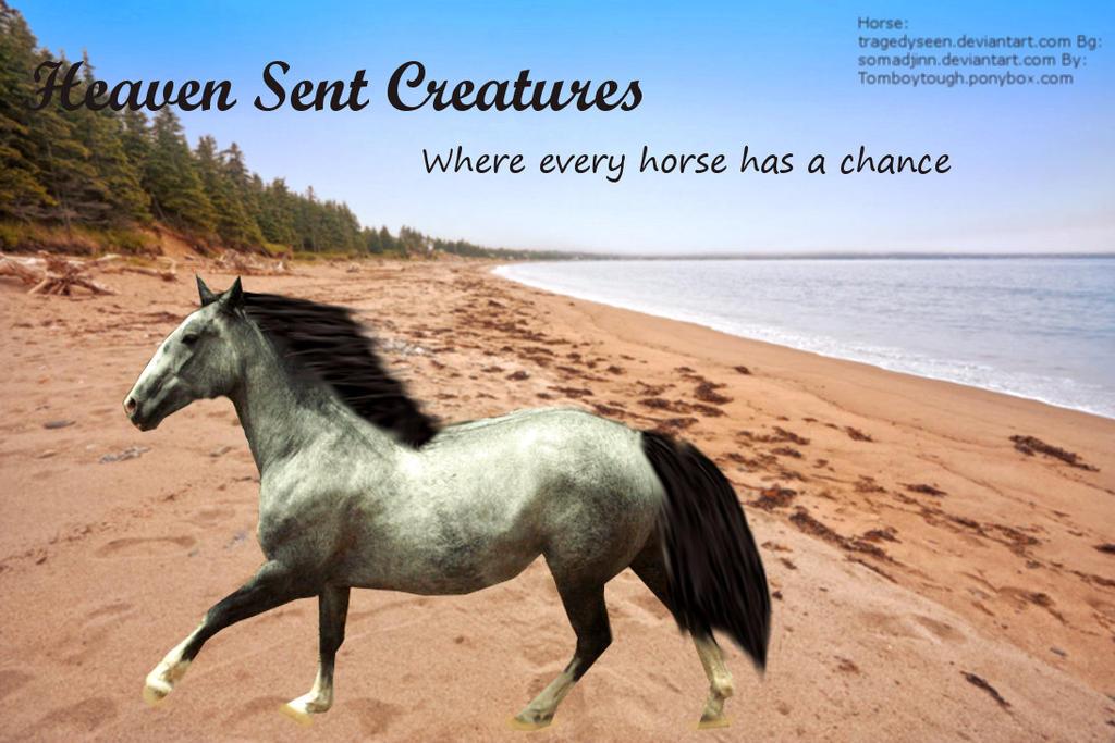 Heaven Sent Creatures by Adimina