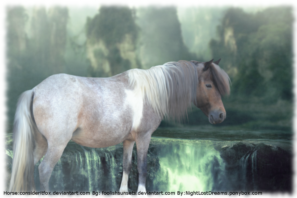 Avon Old Photo Horse Pic by Adimina