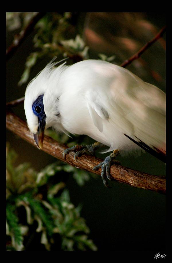 Birdjuly209-3537 by xXPayneXx