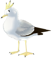The Best Gull  by seagaull