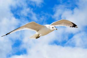 Flight  by seagaull