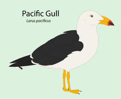 Pacific Gull by seagaull