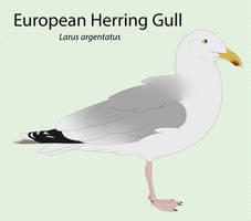 European Herring Gull by seagaull