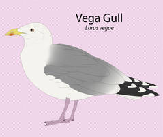Vega Gull by seagaull