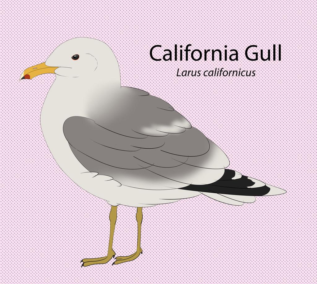 California Gull by seagaull