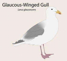 Glaucous Winged Gull by seagaull
