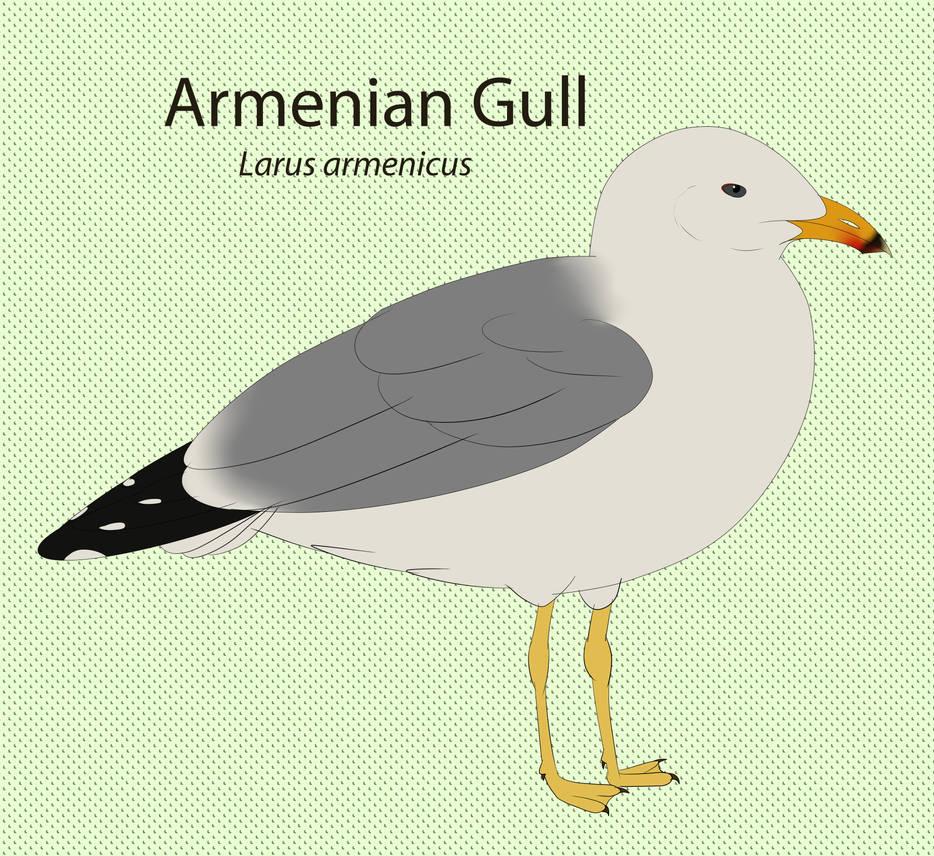 Armenian Gull Chart  by seagaull