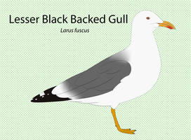 Lesser Black Backed Gull Chart by seagaull