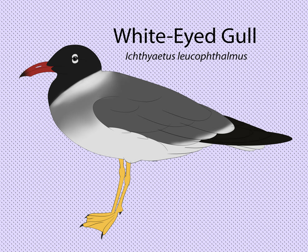 White Eyed Gull Chart by seagaull