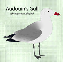 Audouin's Gull by seagaull