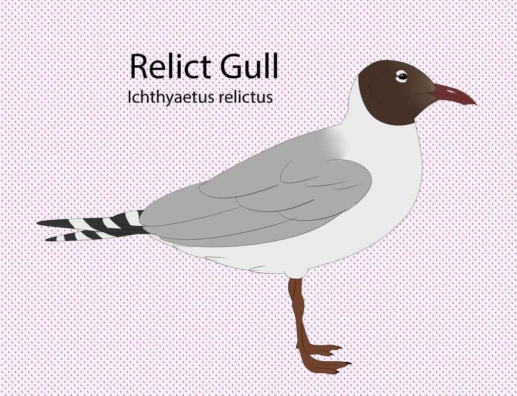 Relict Gull by seagaull
