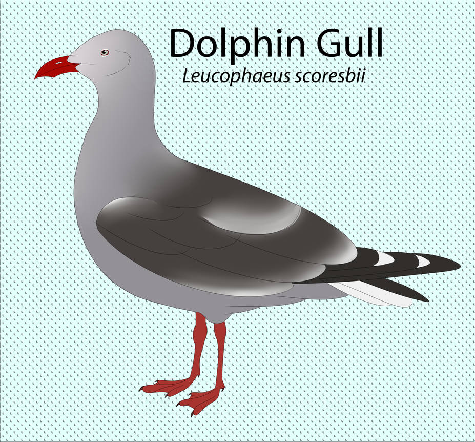 Dolphin Gull by seagaull