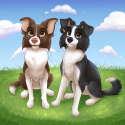 Pet Commission Luna and Nymeria Border Collies