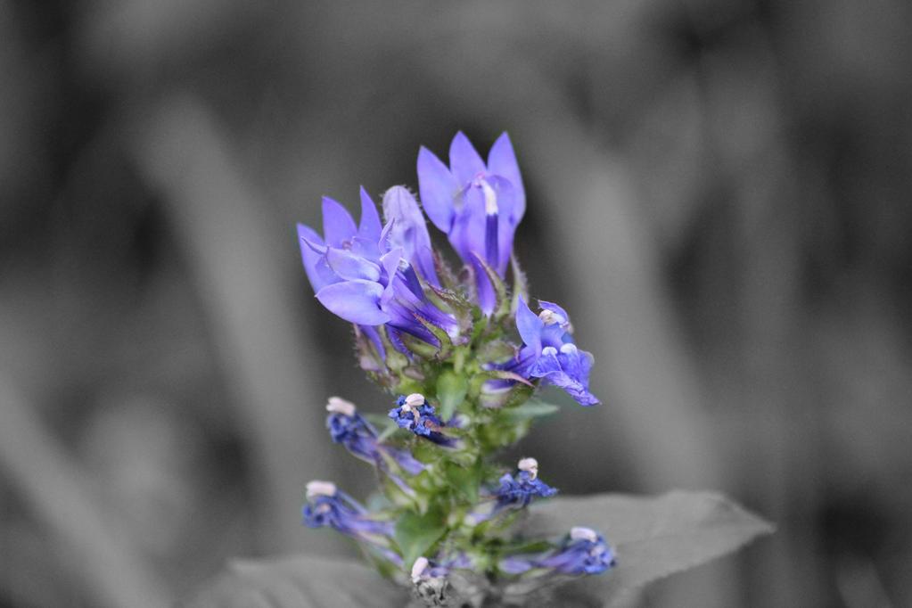 Purple Majesty by taryncoda03