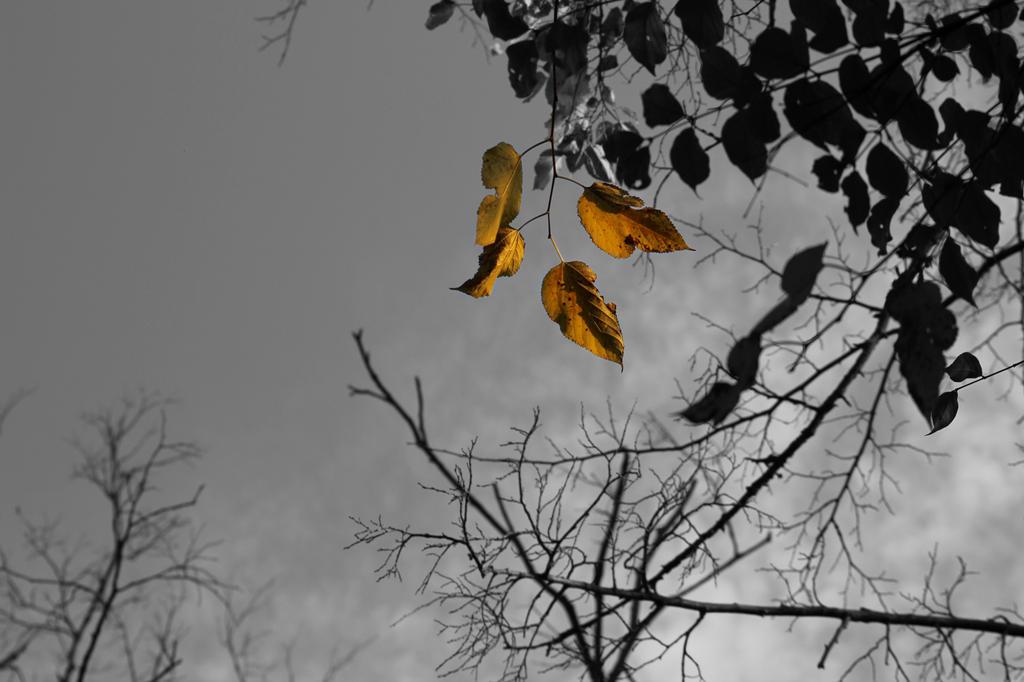 Golden by taryncoda03