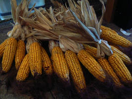 Corn by IceXDragon