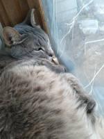 Sir General Cat Let Fella Go! by IceXDragon