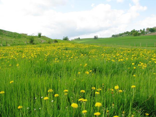 Yellow Flower Field by 333half-evil-stock on DeviantArt