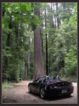BMW Z4, Avenue of the Giants