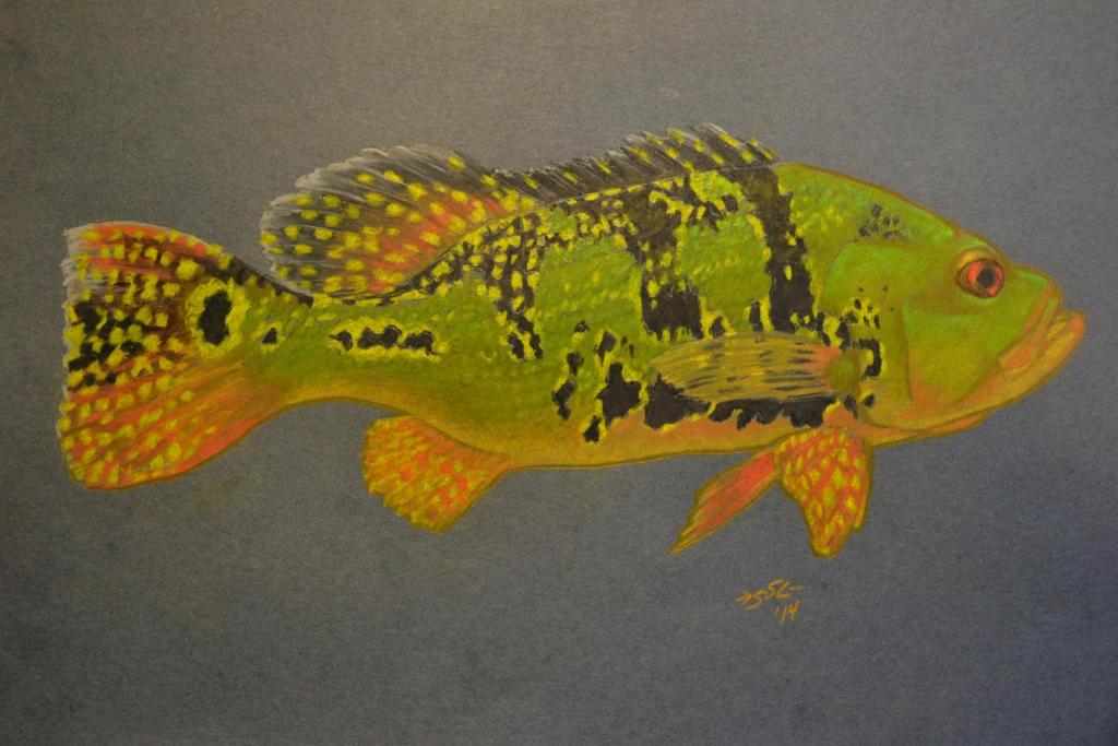 Kelberi peacock bass - photo#16