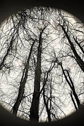Tree Line IV