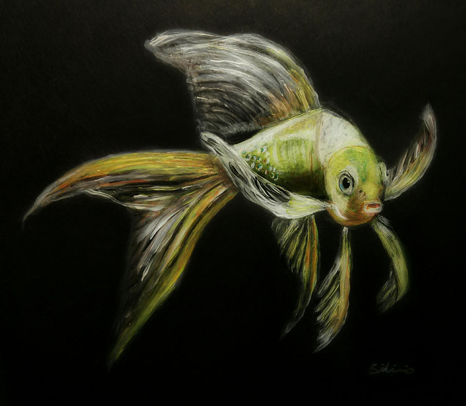 Long tail fish by rmsilicio on deviantart for How long is fish good for