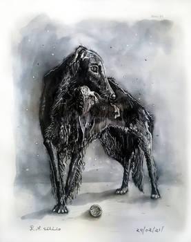 Borzoi Greyhound