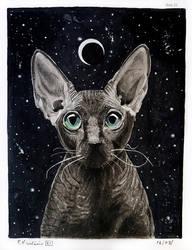 Night Sphynx cat