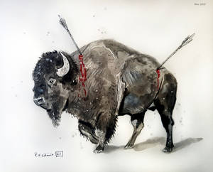 Wounded Bison