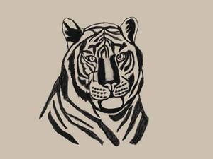 Tiger-8-18-19