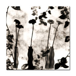 Flowers by SevdaCicegi